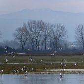 Welcoming of cranes Dolný Zemplín Slovakia - 2