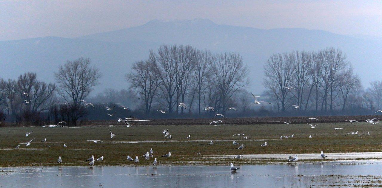 Welcoming of cranes Dolný Zemplín Slovakia – 2