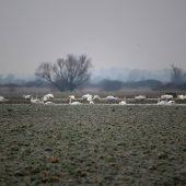 Welcoming of cranes Dolný Zemplín Slovakia - 5