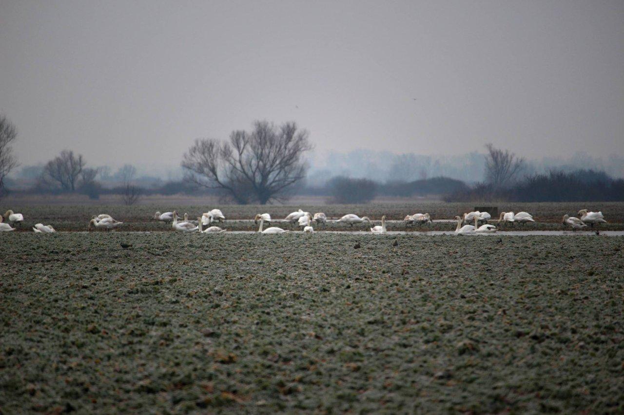 Welcoming of cranes Dolný Zemplín Slovakia – 5