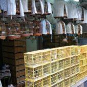 Bird Market, Yuen Po Street, Hong Kong