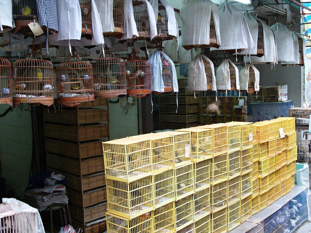 Bird Market, Yuen Po Street, Places to Visit in Hong Kong