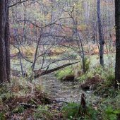 Malá Izra swamp, Kosice region, Slovakia
