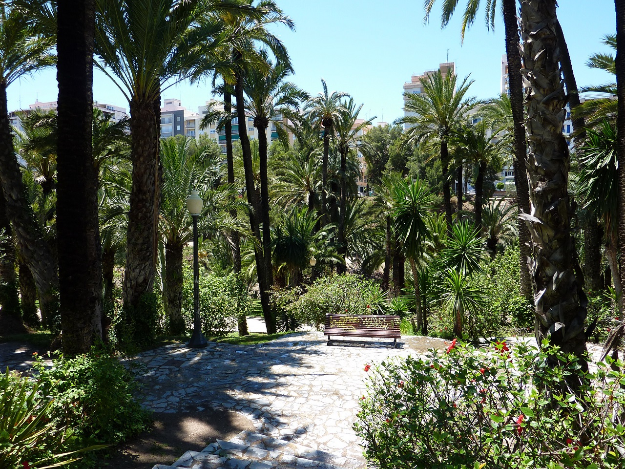 Palm trees are everywhere in Elche, Cities in Spain