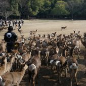 Nara park, Visit Japan - Places to visit in Japan