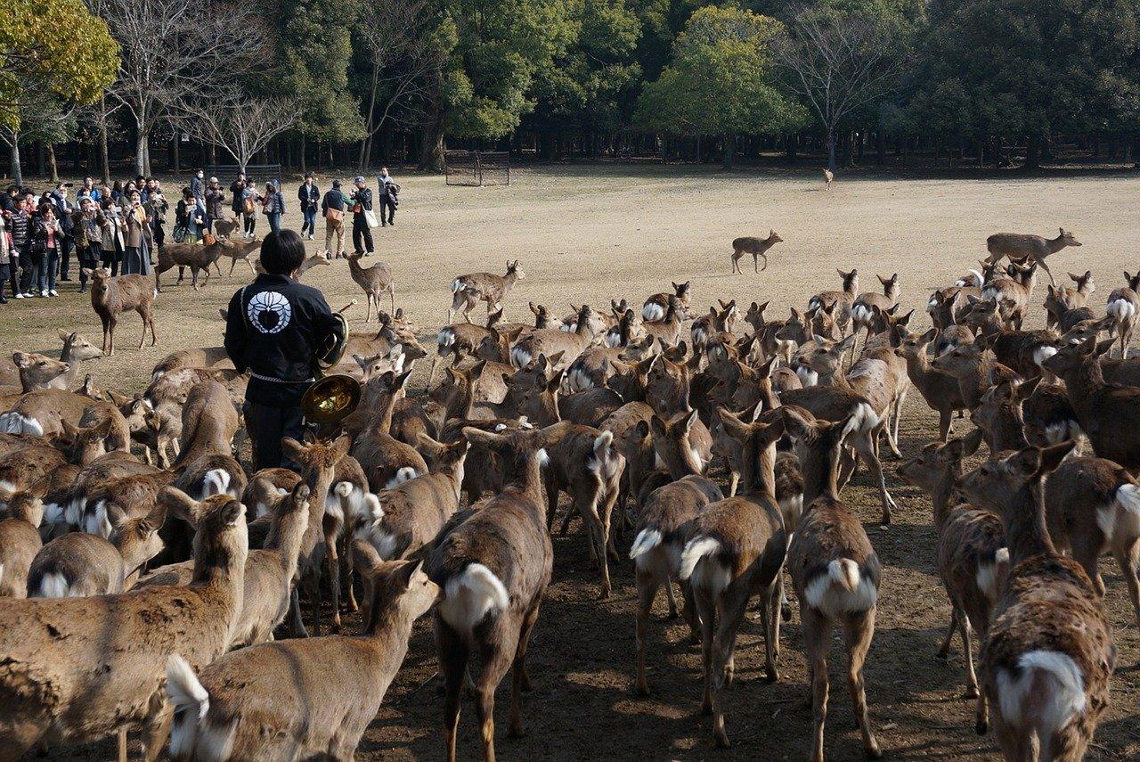 Nara park, Visit Japan – Places to visit in Japan