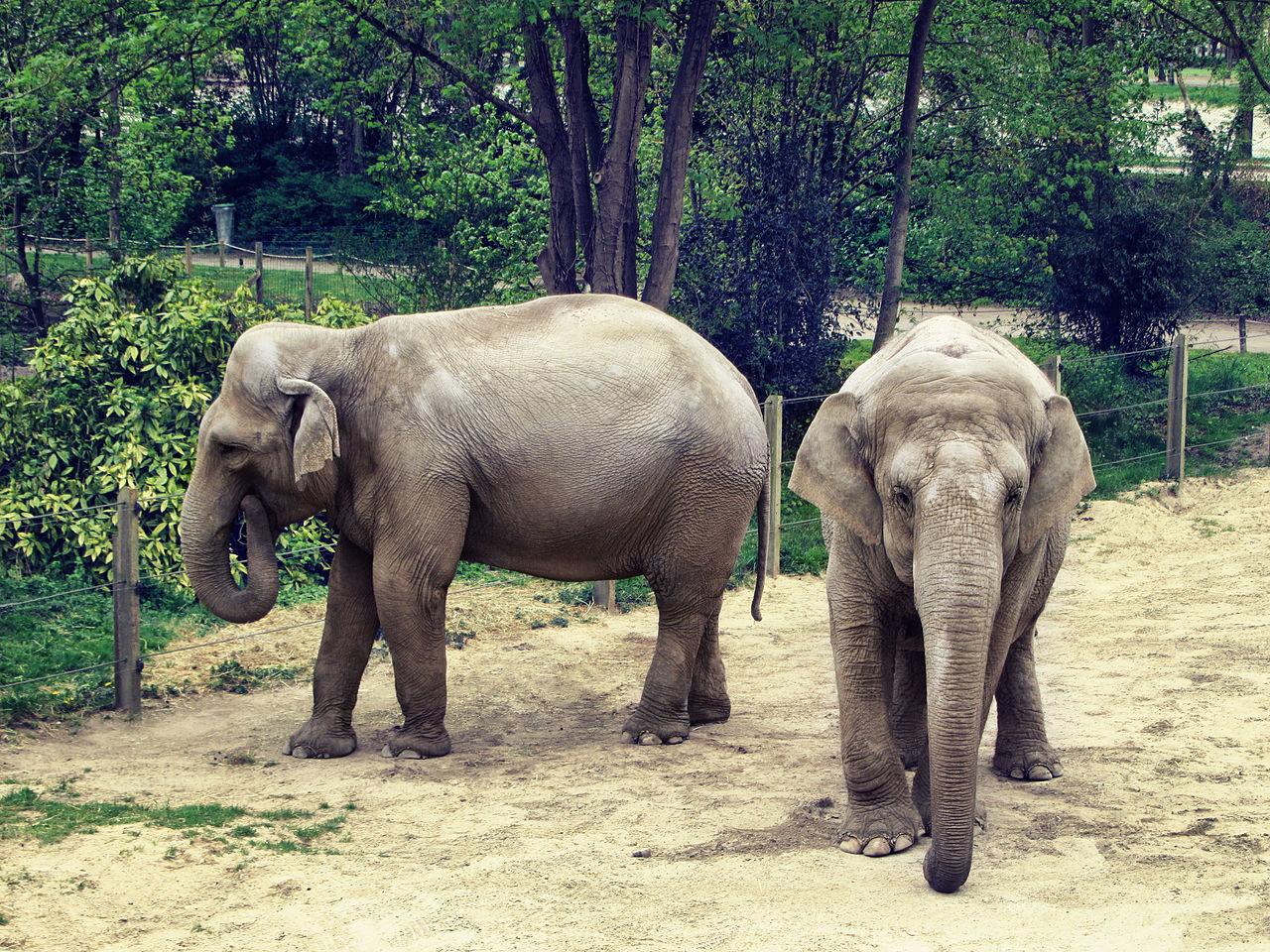 Zoo d'Amiens, France