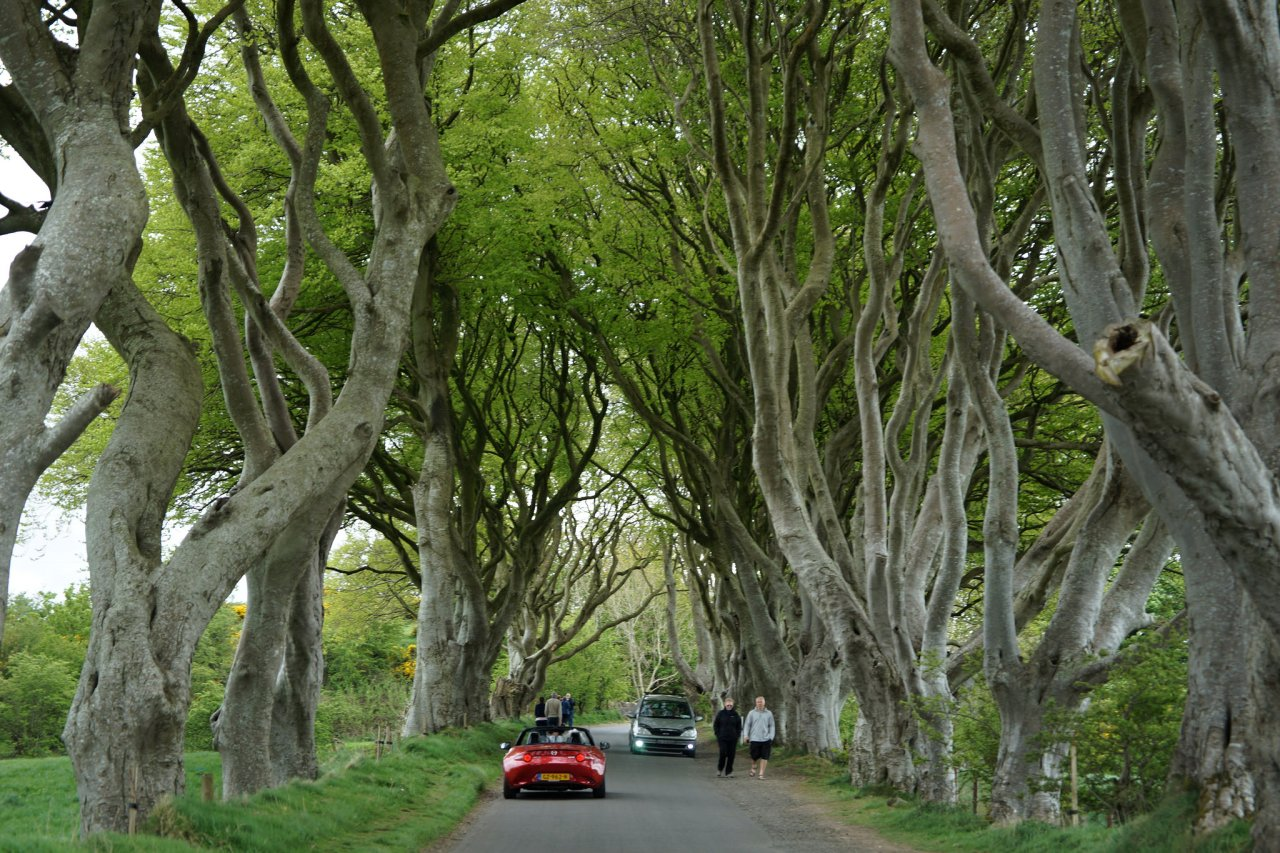 Dark Hedges, Best places to visit in the UK