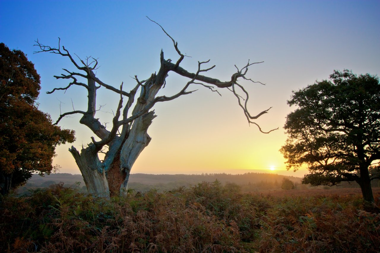 New Forest, England, Best places to visit in the UK