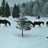 Geravy, Slovak Paradise National Park, Slovakia