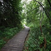 Mokrade Hnilca educational walking path in Stratena, Slovak Paradise National Park, Slovakia