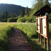 Mokrade Hnilca educational walking path in Stratena, Slovak Paradise National Park, Slovakia 3