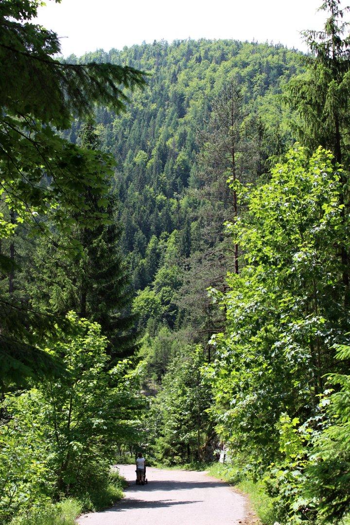 Stratenský canyon, Slovak Paradise National Park, Slovakia 4
