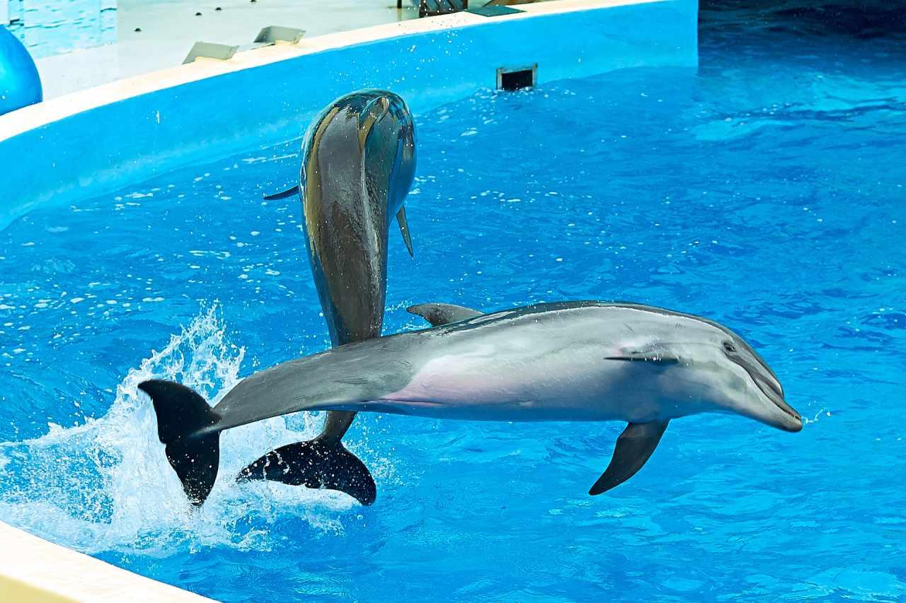 Anapa Dolphinarium (Nemo), Anapa, Russia