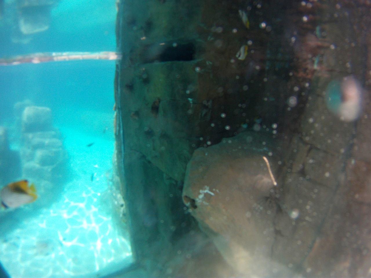 Grand Reef at Discovery Cove, SeaWorld Orlando, USA