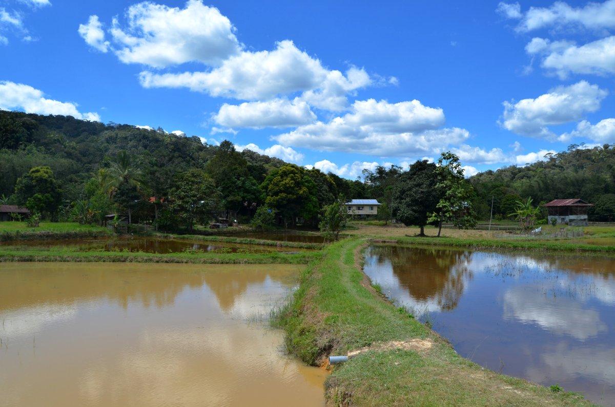 Kelabit Highlands, Malaysia