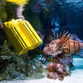 SEA LIFE London, Top tourist attractions in London