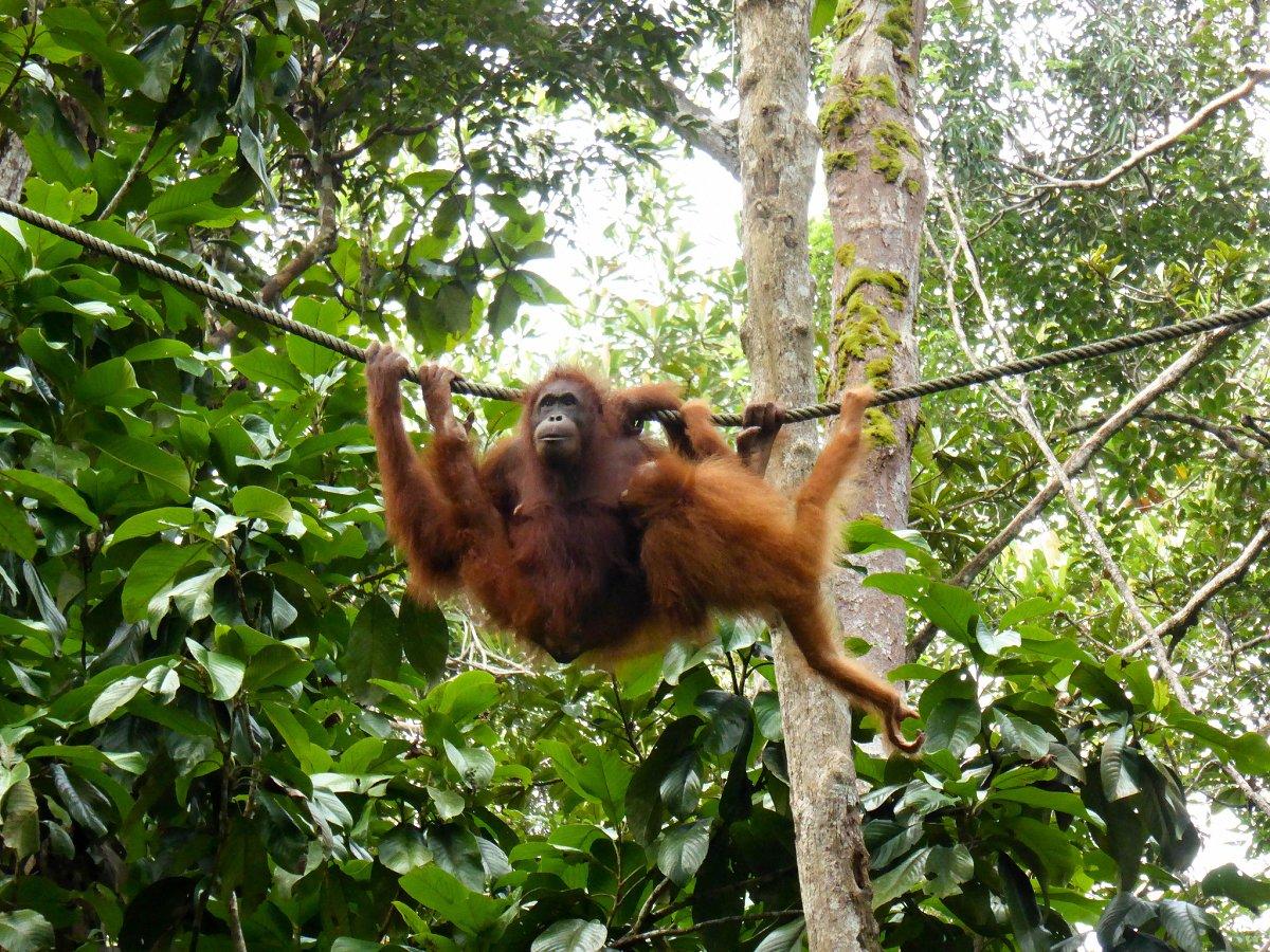 Semenggoh Nature Reserve, Malaysia