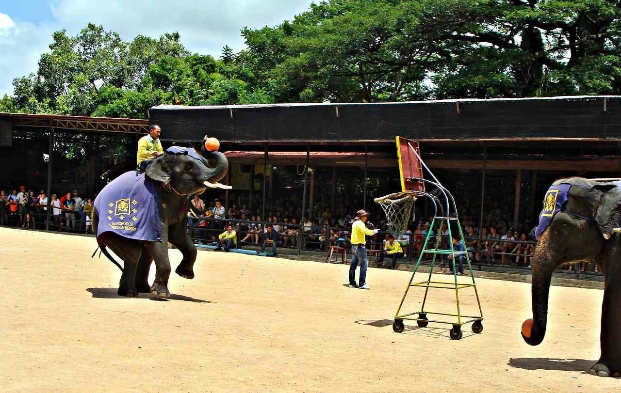 Sriracha Tiger Zoo, Top tourist attractions in Pattaya