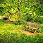 Botanical Gardens, Asheville, North Carolina, Visit in USA