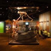Museum of Nature & Science, Denver, Colorado, Visit in USA