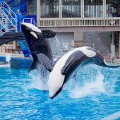 SeaWorld , San Diego, California, Visit in USA