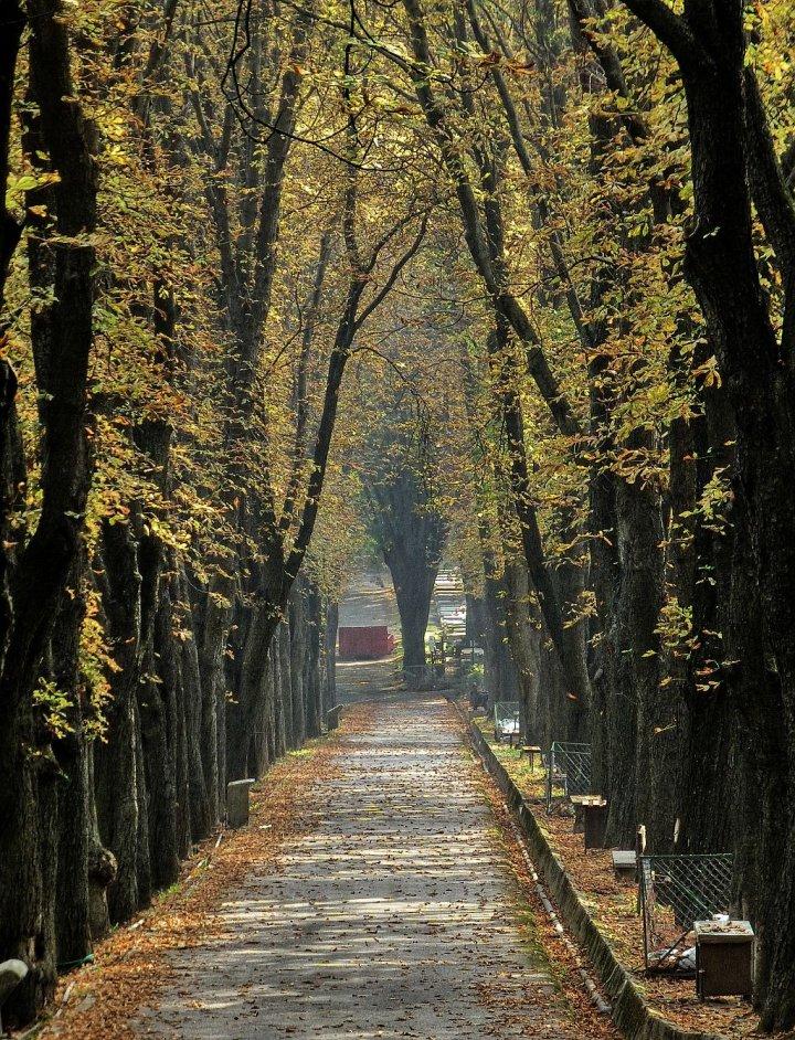 Kosice Public Cemetery, Slovakia