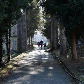 Rozalia cemetery, Kosice, Slovakia - 1