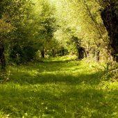 De Biesbosch National Park,Best Places to Visit in the Netherlands