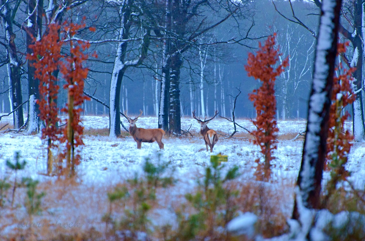 Hoge Veluwe National Park, Best Places to Visit in the Netherlands