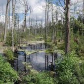 Bialowieza Forest, Best Places to Visit in Poland