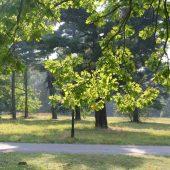 Katowice Forest Park, Poland