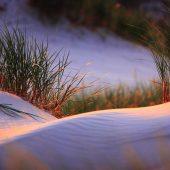 Sand dunes at Slowinski National Park, Poland