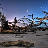 Driftwood Beach, Georgia, Best Beaches in the USA