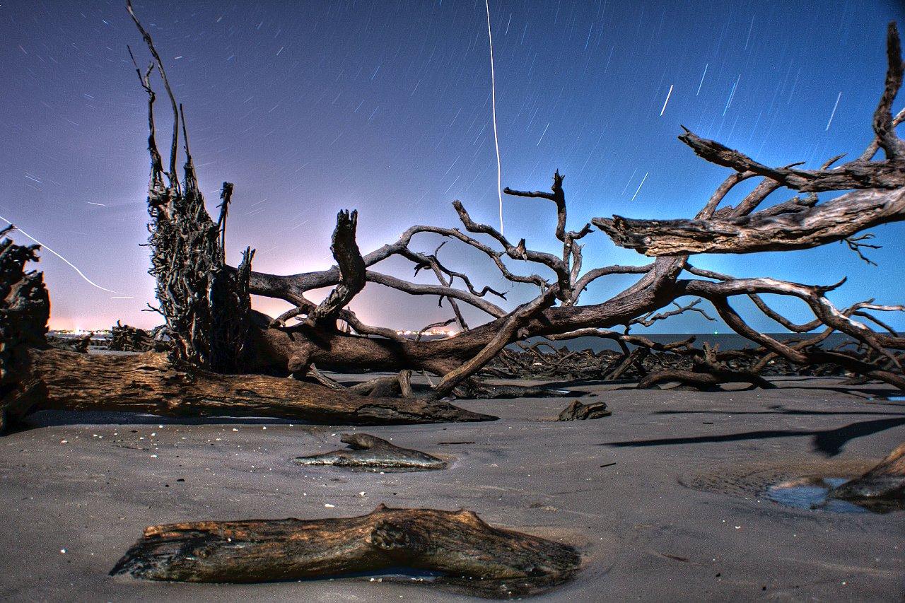Driftwood Beach, Georgia, Best Beaches in the USA