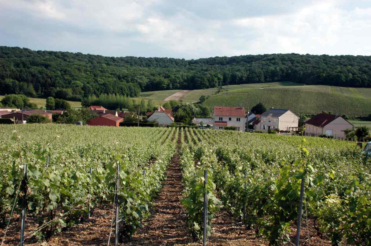 Champagne Hillsides, Houses and Cellars, Unesco France