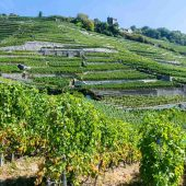 Climats, terroirs of Burgundy, Unesco France